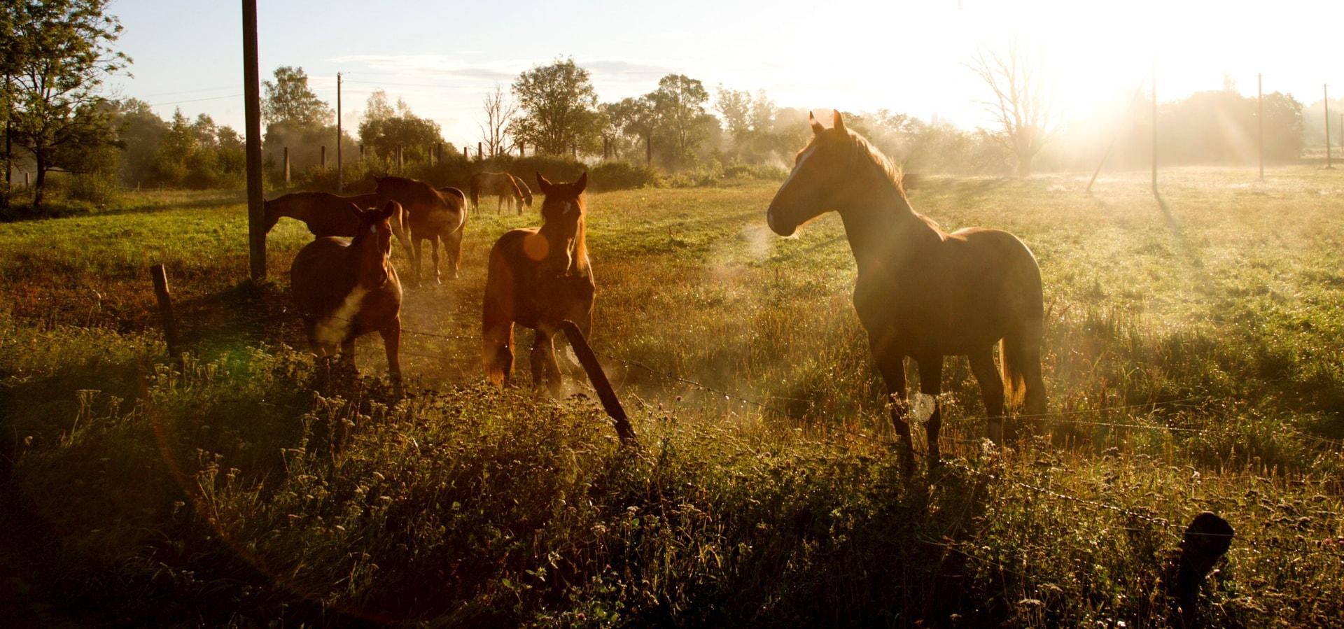 Arkliai.com